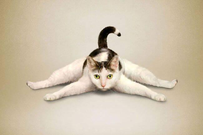 Tre miti da sfatare sullo yoga, con il sorriso!