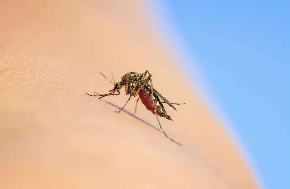 ZZZ Zanzare che incubo