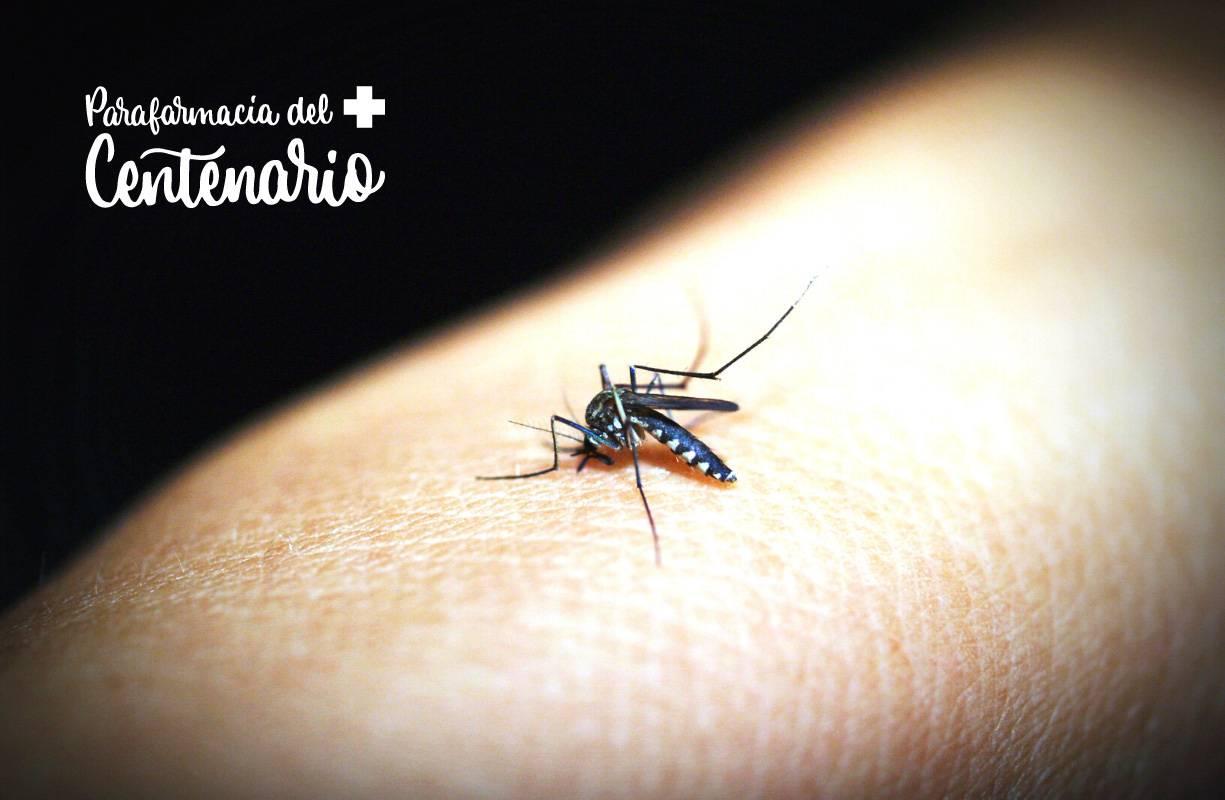 Punture di insetti, come riconoscerle e cosa fare
