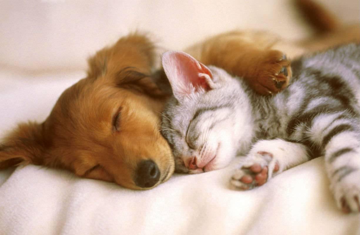 Giovedì 20 MAGGIO - Giornata veterinaria