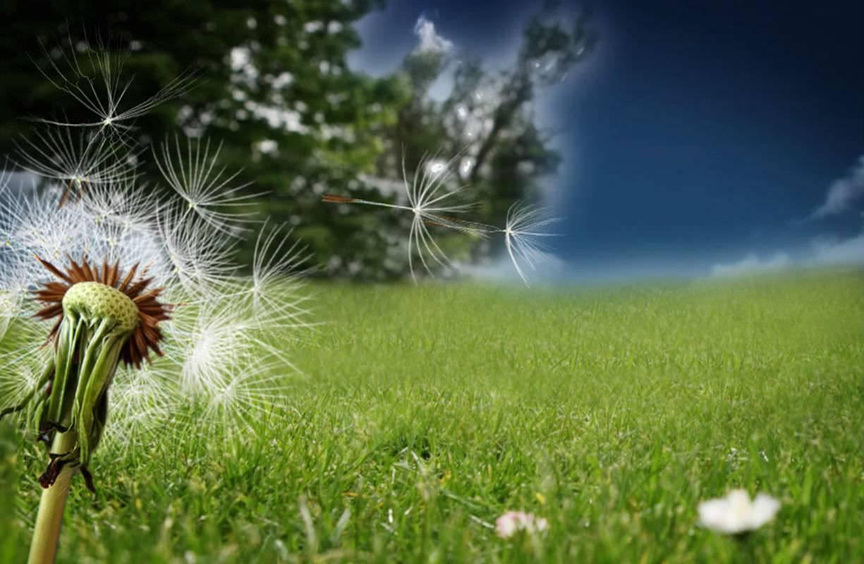 Primavera: allergie stagionali in arrivo? Ecco qualche consiglio