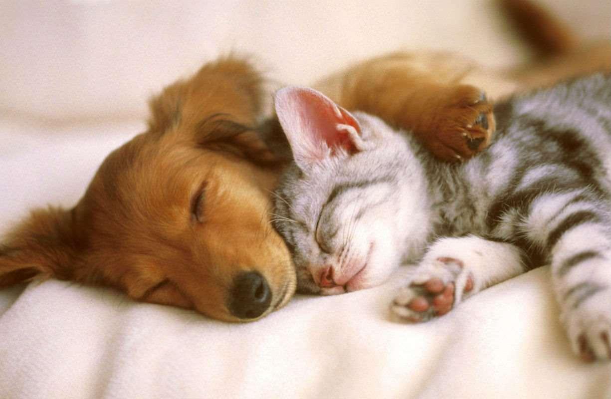 Reparto farmaci veterinari